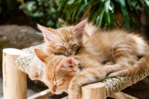 Gattini che dormono abbracciati