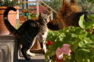 Gatto che annusa un cane