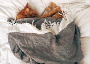 gatto a letto