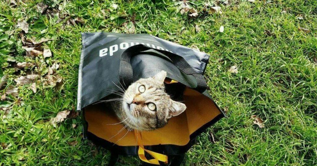 gatto dentro una busta