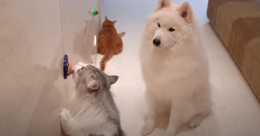 Gatti con un cane