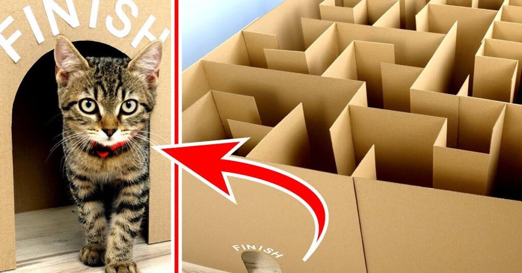 Gatto che prova a superare un labirinto