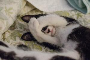 Gatto che si vergogna