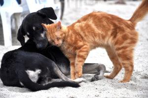 Gatto che coccola un cane