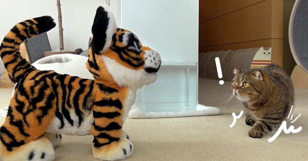 Gatto con una tigre peluche
