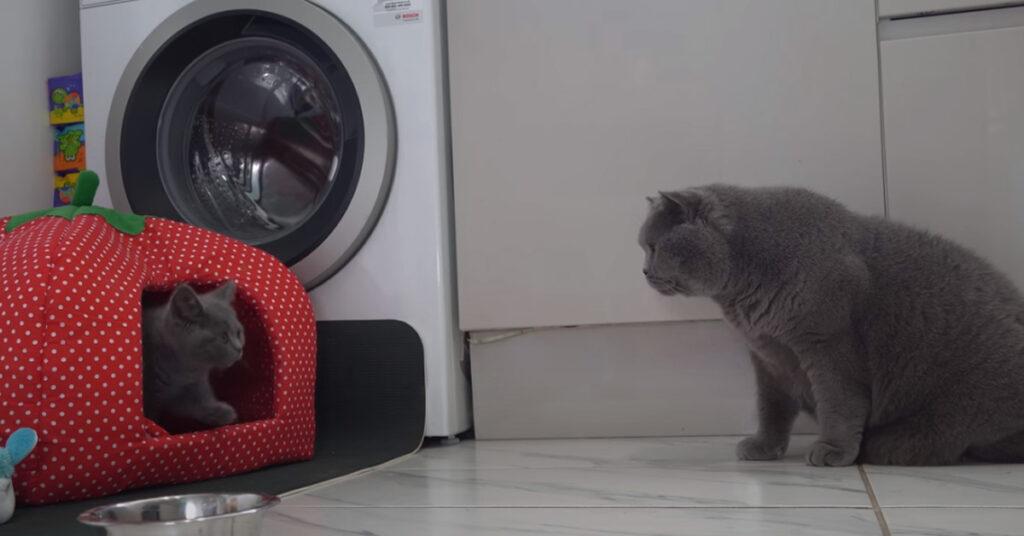 Due gatti che si osservano