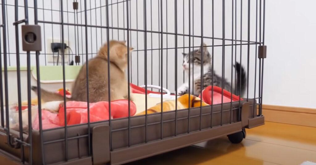 Due gattini che giocano