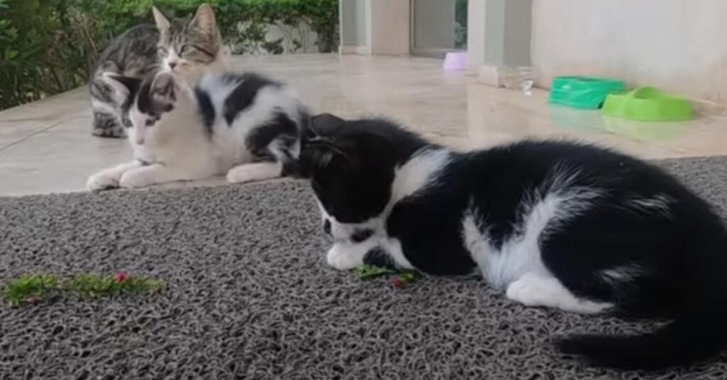 Gatti che si divertono