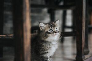 Gattino che osserva in alto