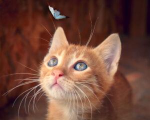 Gatto con una farfalla