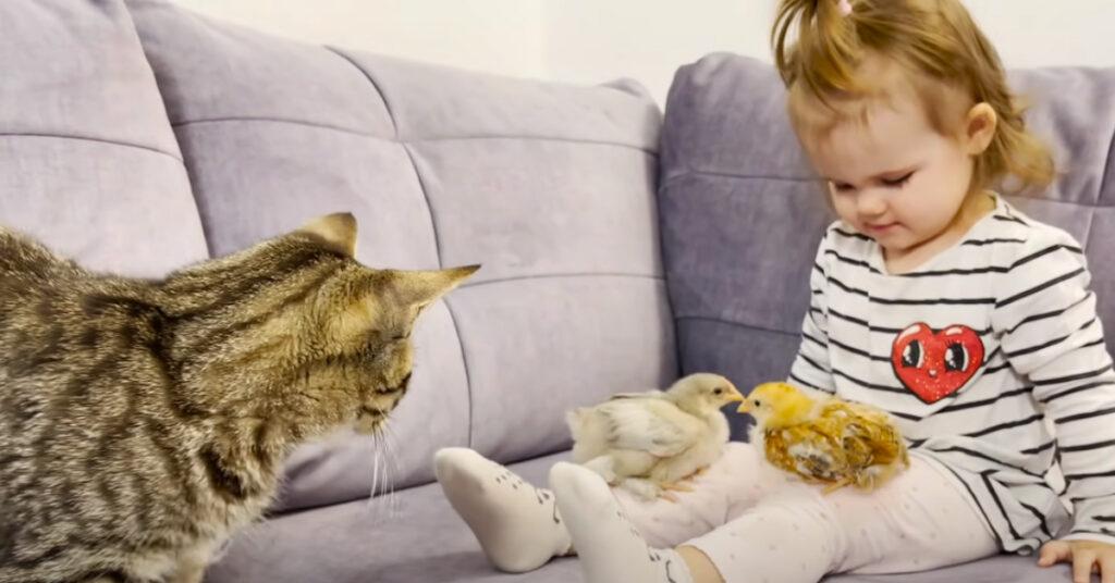 Gatto che osserva una bambina con dei pulcini