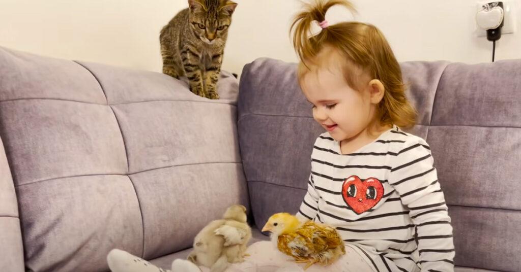 Gatto, bambina e pulcini