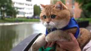 Gatto in riva a un fiume