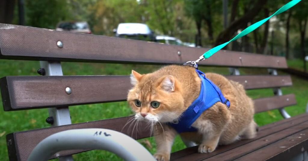 Gatto su una panchina
