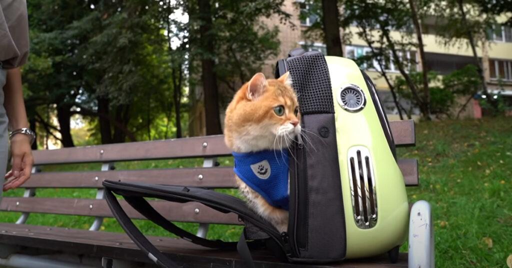 Gatto dentro ad una borsa