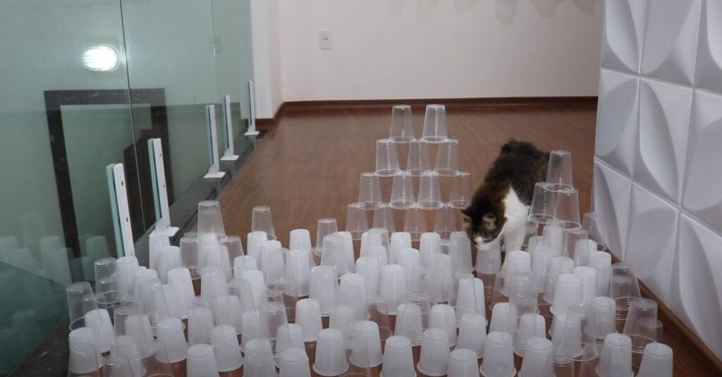 Gatto che gioca con dei bicchieri