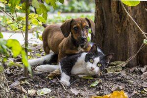 Gatto e cane che giocano
