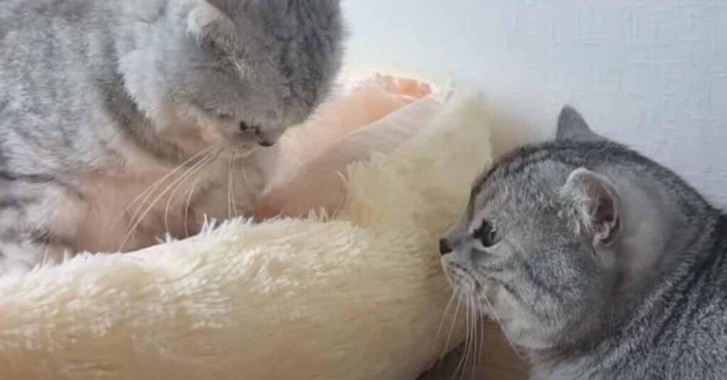 Due gatti che si guardano