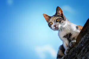 Gatto che guarda in basso