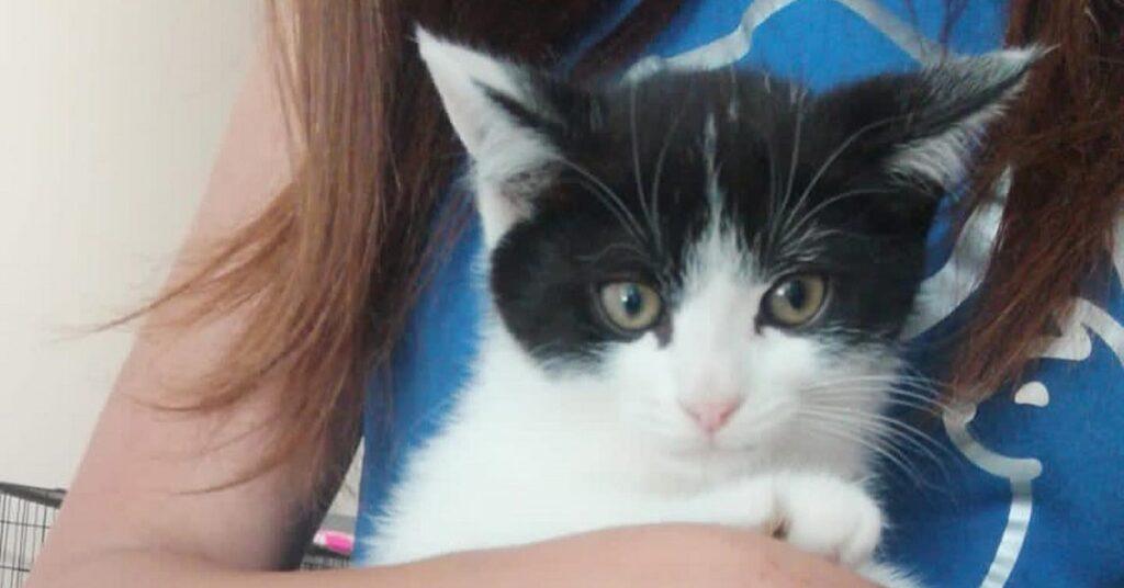 gattino bianco e nero triste