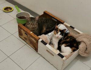 gatte dentro una scatola