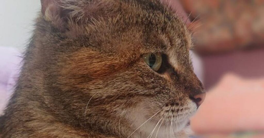 gatta che osserva