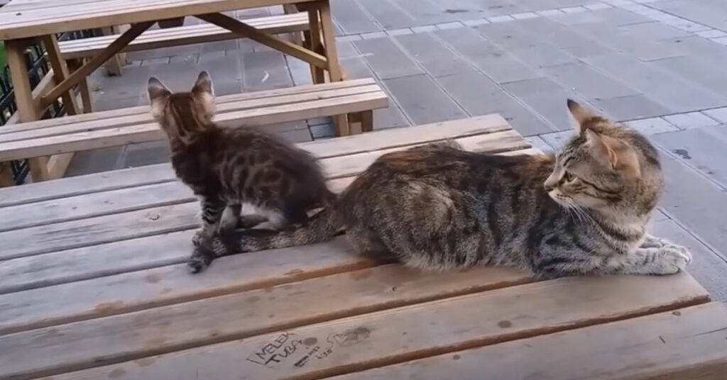 Due gatti su un tavolo