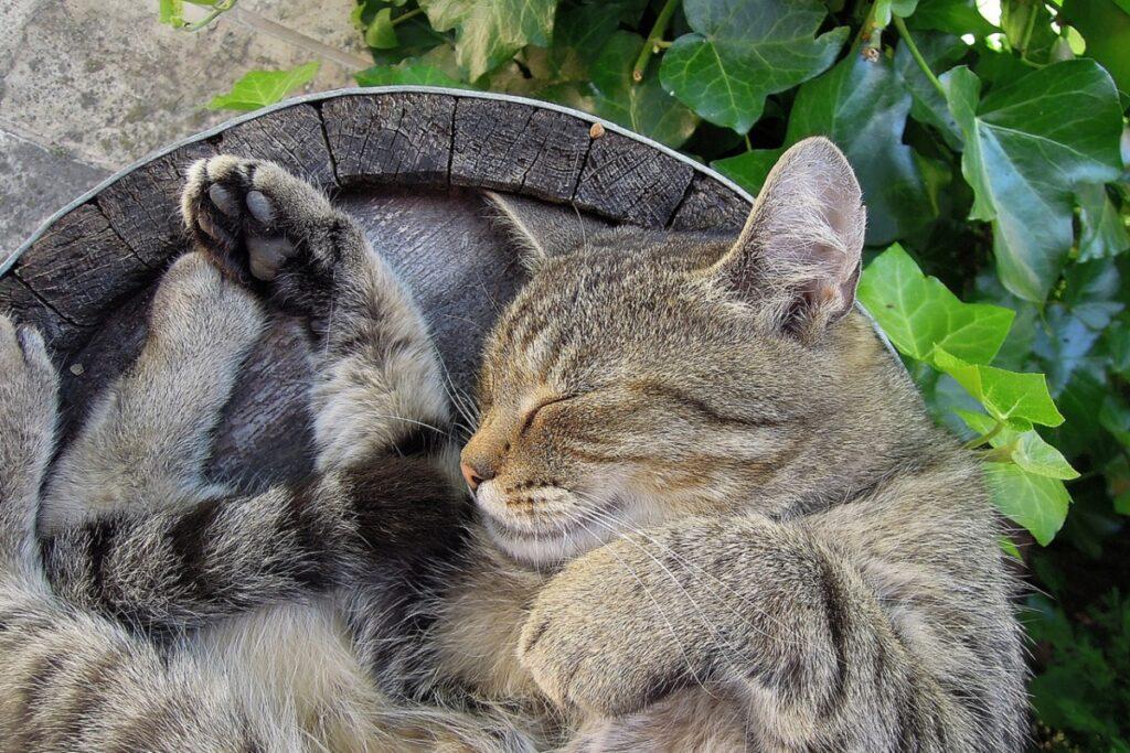 gatto dorme in cima alle cose