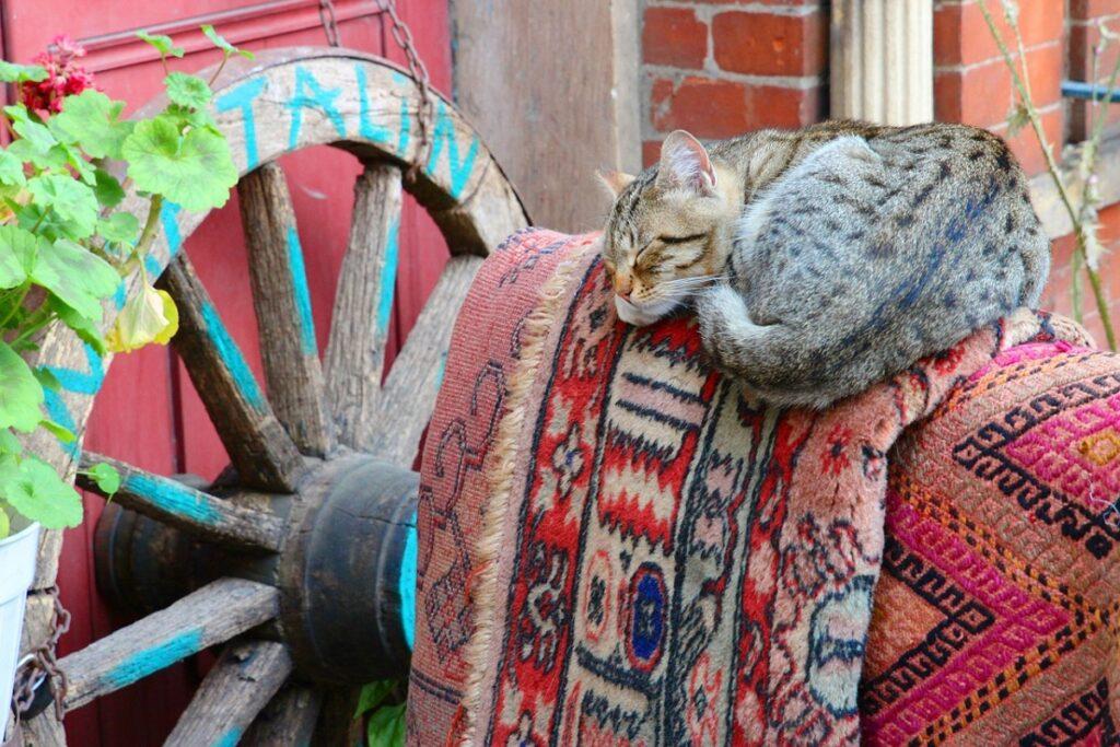 gattino dorme su un tappeto