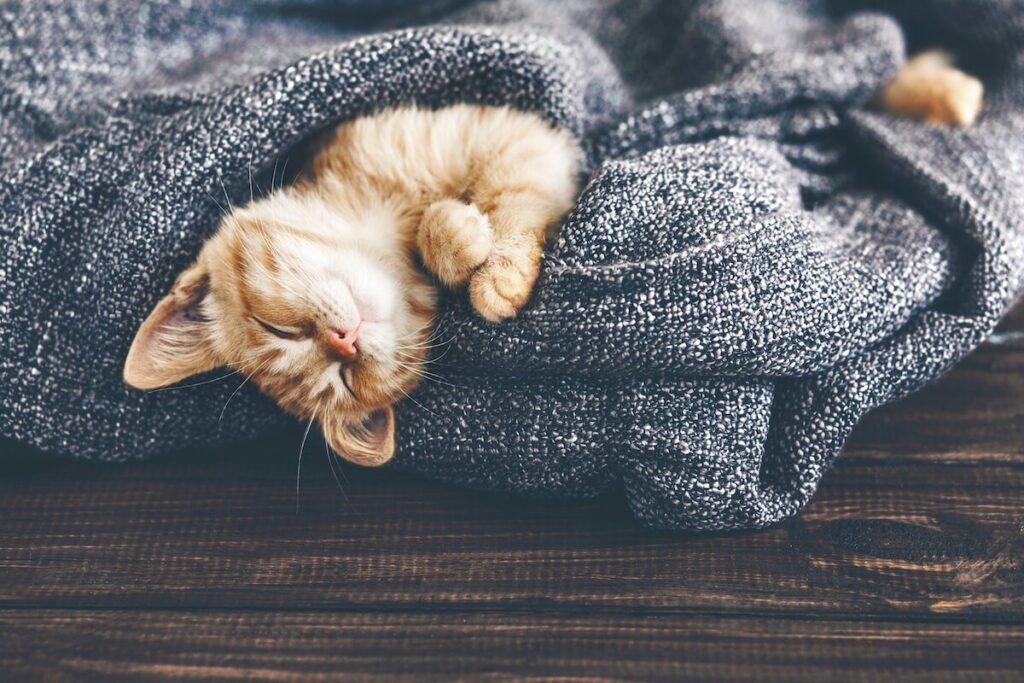 gattino che dorme al caldo