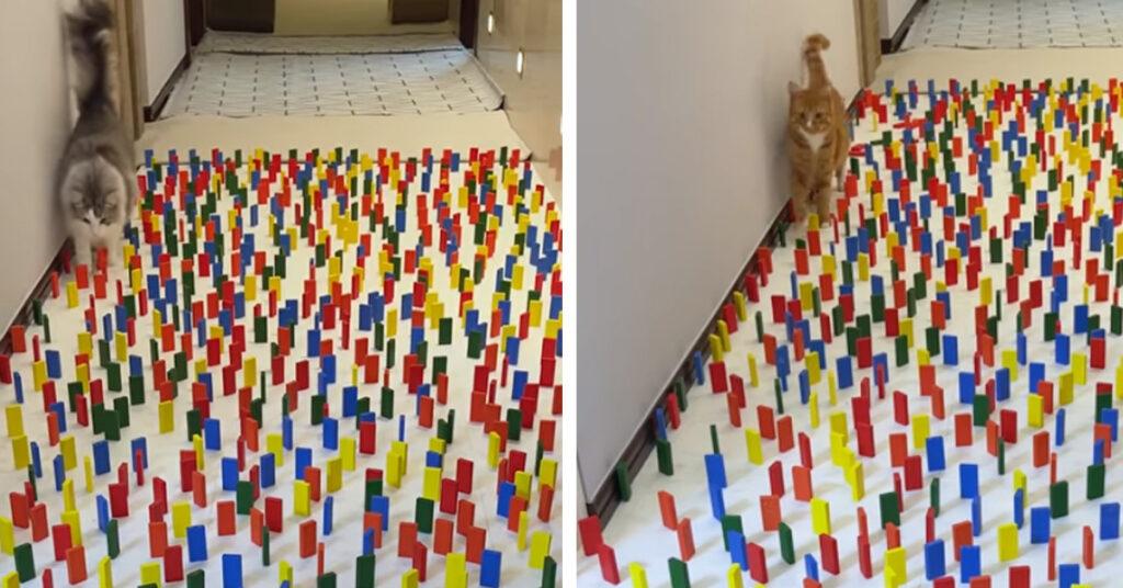 Gatti che camminano tra le tessere del domino