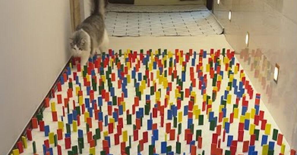 Gatto che cammina tra le tessere del domino