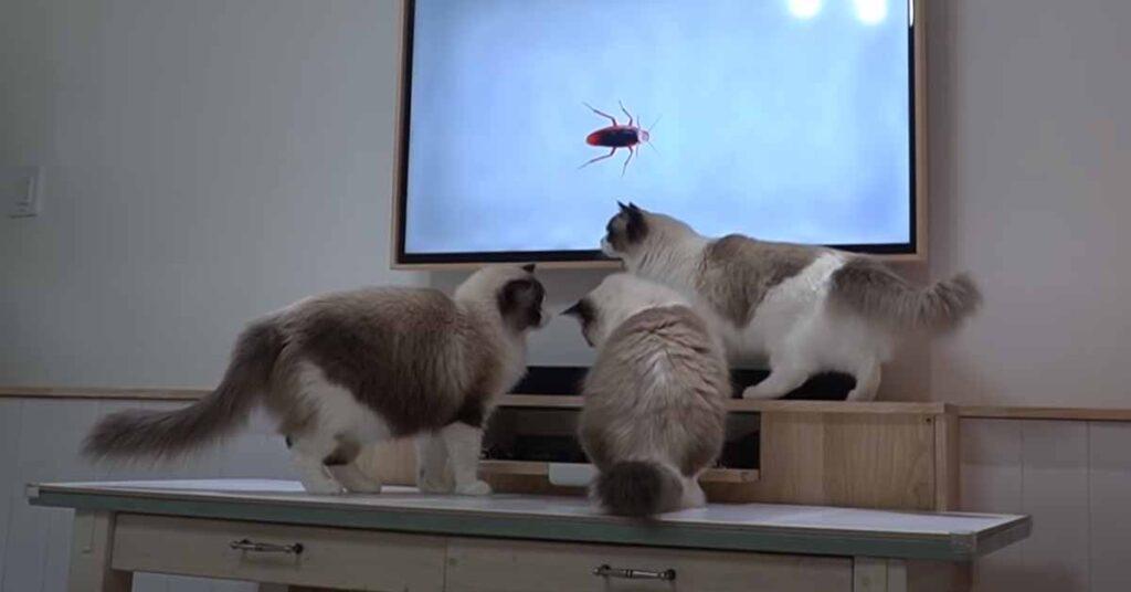 Gatti che guardano la televisione