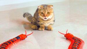 Gatto con degli insetti giocattolo