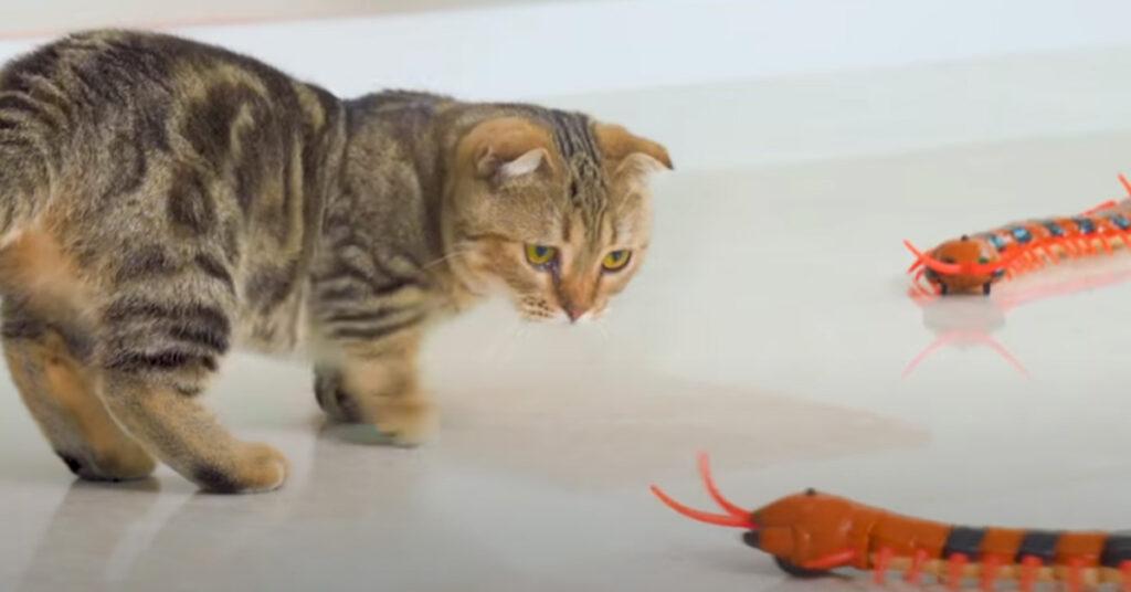 Gatto che guarda un centopiedi finto