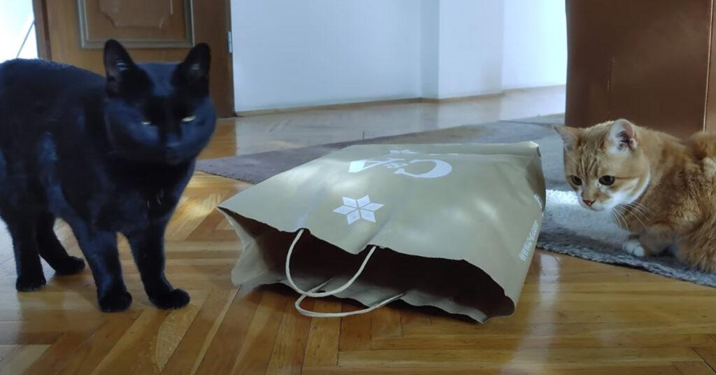 Gatti che si divertono con un sacchetto