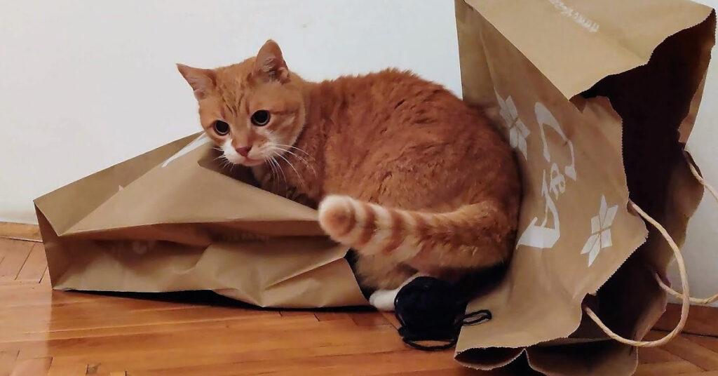 Gatto che gioca con dei sacchetti