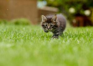 Gattino che cammina in un prato