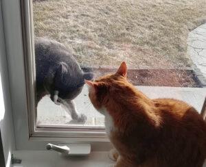 Gatti separati da un vetro
