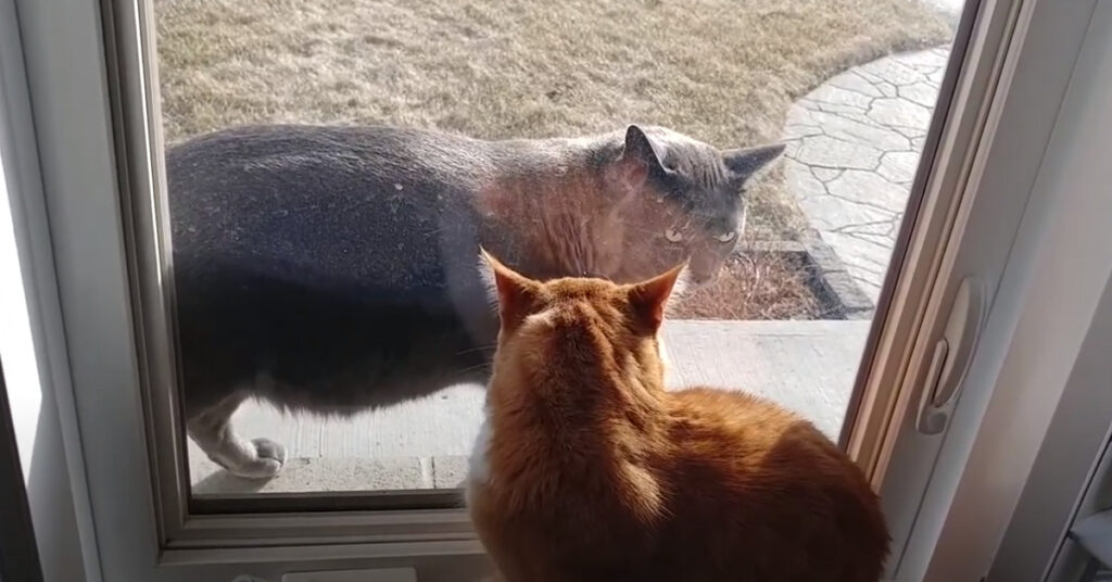 Gatti che si osservano
