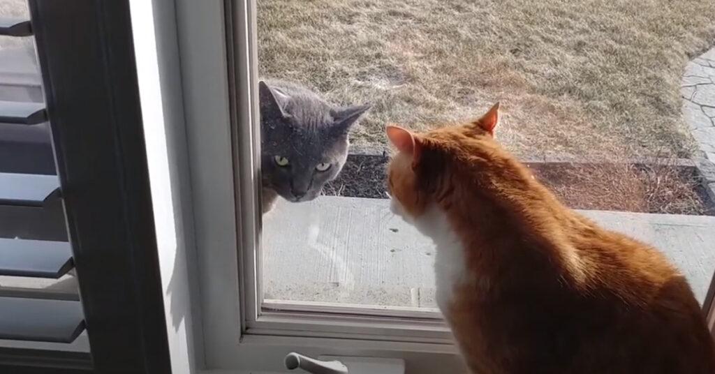 Due gatti separati da una porta