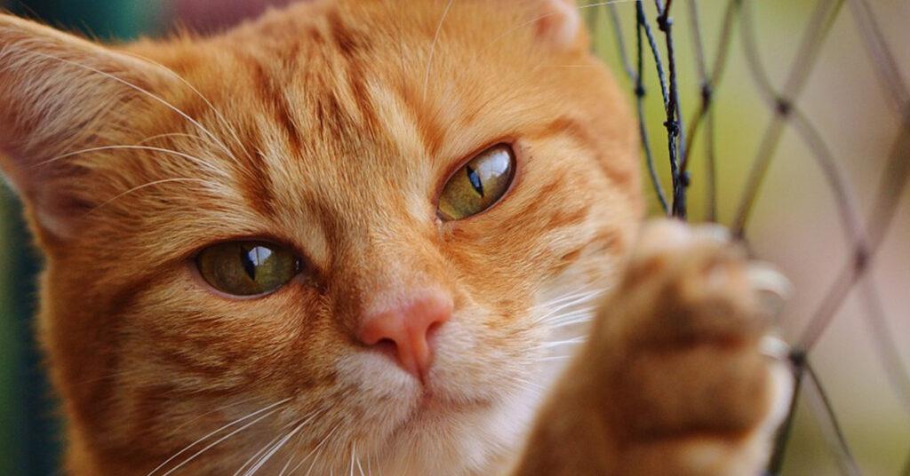 Gatto che si arrampica su una rete