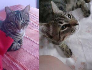 gattini sul letto