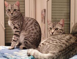 gatte sul letto