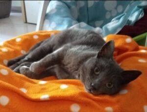 gatta sdraiata in un cuscino
