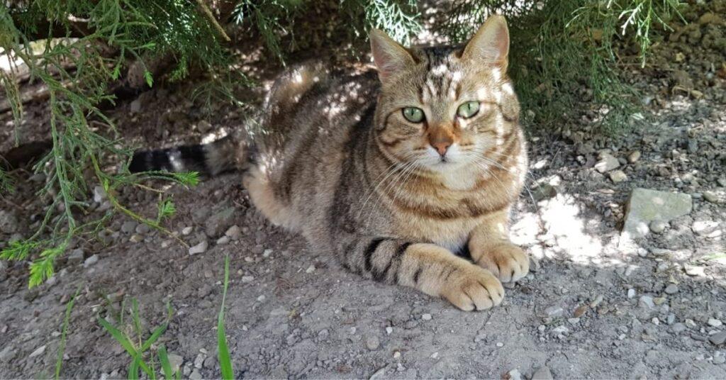 gattina in giardino
