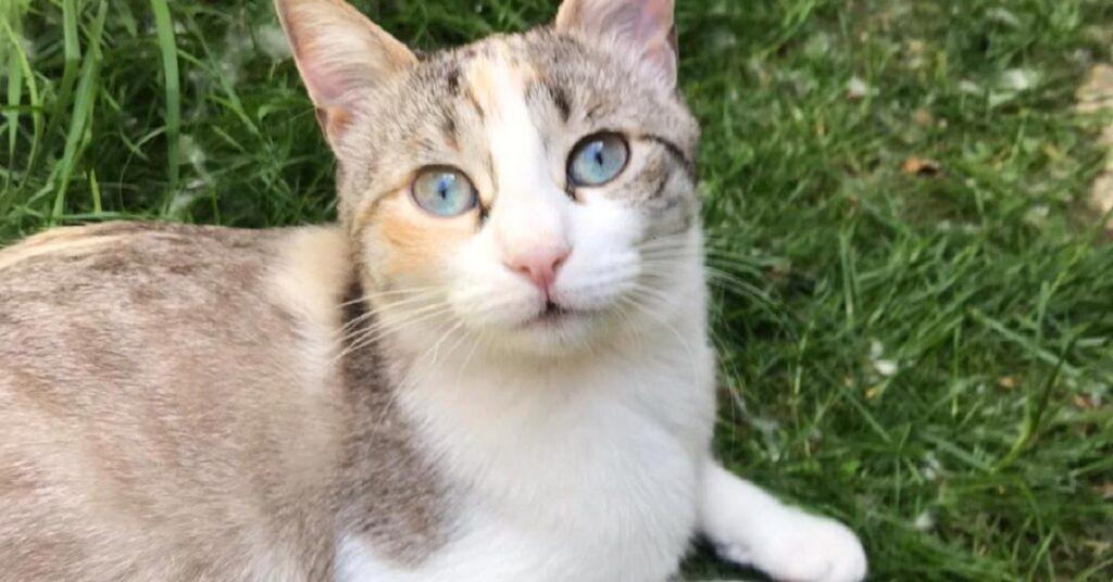 gatto cerca un'adozione