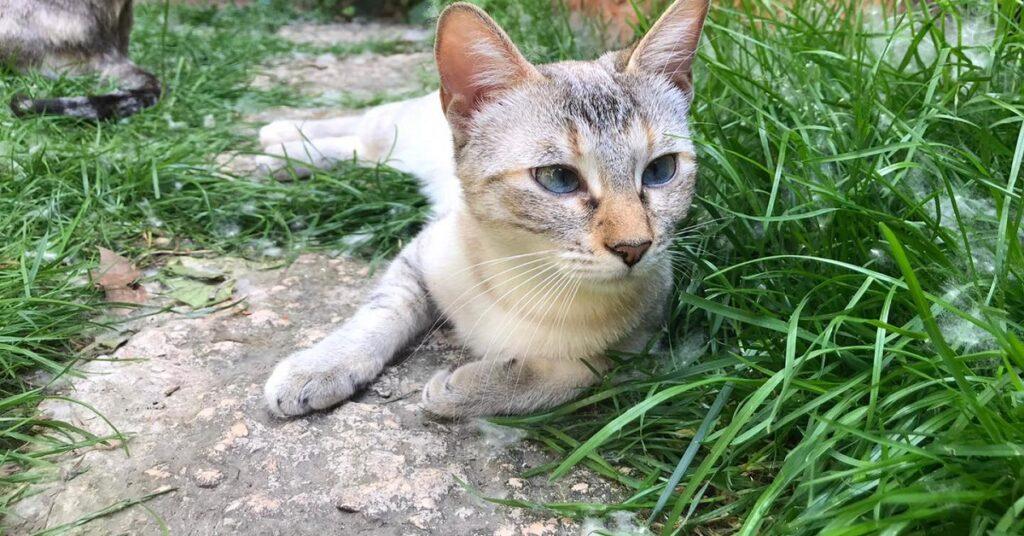 Gattino cerca una padrona