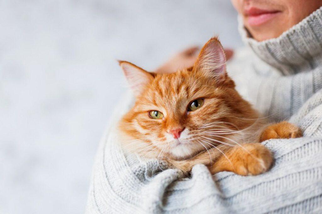 gatto rosso a pelo lungo