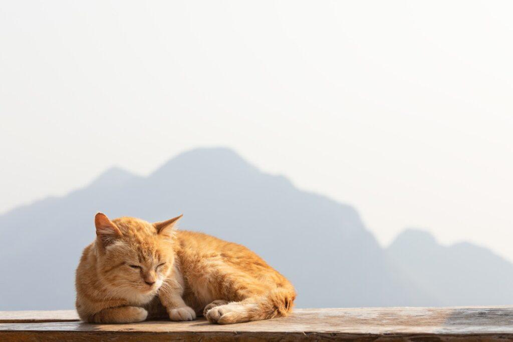 gatto in vacanza in montagna